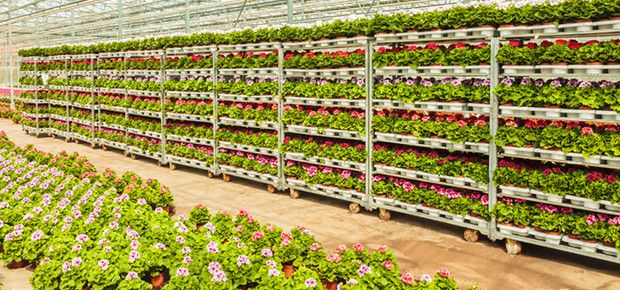 Pflanzenvertrieb & Gartencenter